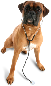 veterinarian in Port Jefferson